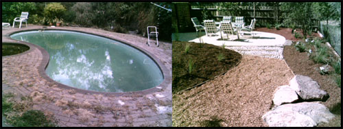 how to get rid of thrips around pool