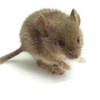 Read Article: How To Get Rid Of Mice