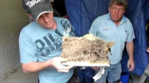 Watch Video: A1 Pest Control - Termite Nest found during an inspection - Sydney
