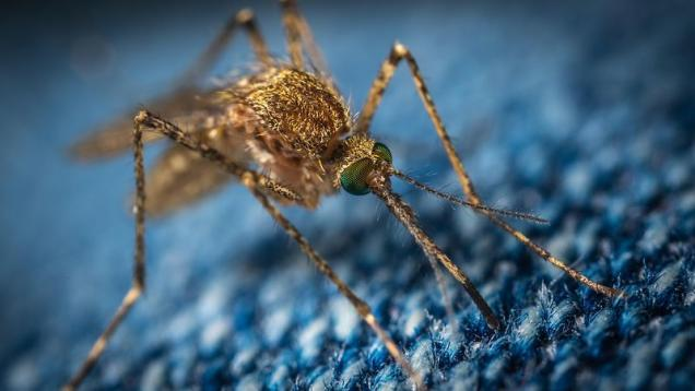 Read Article: 5 Prevention Tips To Control Mosquito Infestation