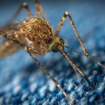 5 Prevention Tips To Control Mosquito Infestation