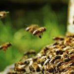 5 Reasons you need to Control Bees Infestation Immediately
