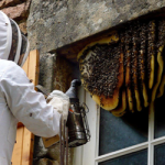 Bee Stings can be Dangerous too, Things Which you Want to know about Bee Stings