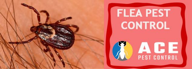 Read Article: How Fumigation helps in reduction of Flea infestation