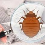 How To Make Our Home Free From Bed Bugs?