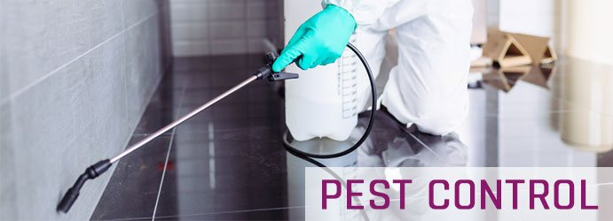 End of Lease Pest Treatment Services