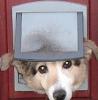 Affordable Pet Doors Melbourne