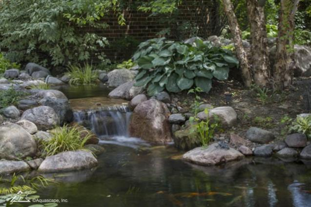 Read Article: Springtime Pond Changes
