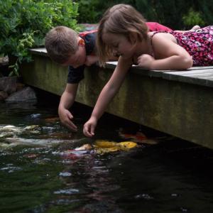 View Photo: Fish Pond
