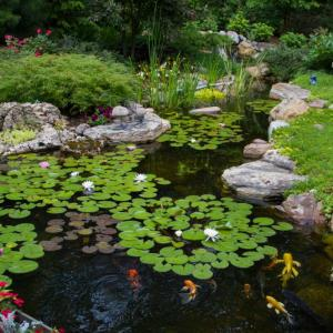 View Photo: Large Pond