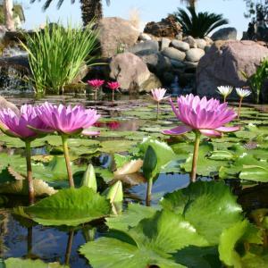 View Photo: Pond Plants