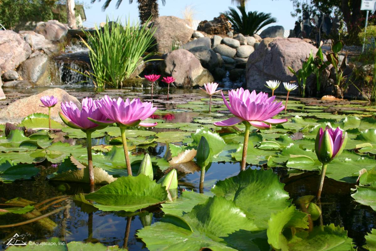View Photo: Pond Plants