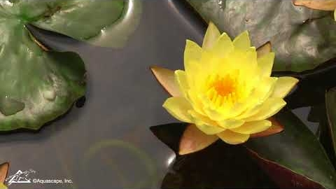 Watch Video: Backyard Pond Inspiration