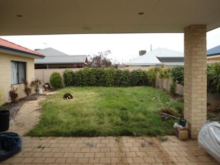 View Photo: A very overgrown lawn