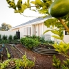 Plant a vegetable garden to increase your home's sustainability