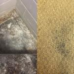 HOW TO DEAL WITH A CARPET MOULD?
