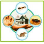 Read Article: Organic Ant Pest control: Is it Healthier? Safer?