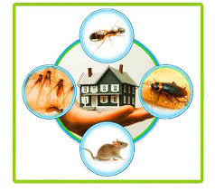 Organic Ant Pest control: Is it Healthier And Safer?