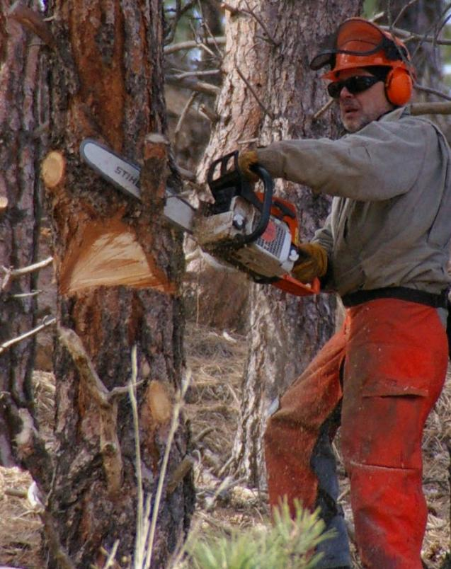 Read Article: Winter is Coming! Chainsaw Tips and Tricks for Beginners