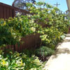 Greywater Systems Melbourne