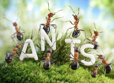 Read Article: Why You Should Look For Ant Control Services?