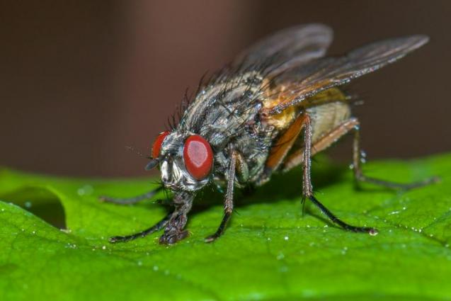 View Photo: Flies control Perth