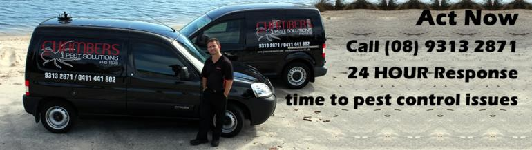 View Photo: Pest Control Services Perth