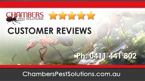 Watch Video: Chambers Pest Solutions Customer Reviews