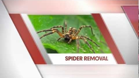 Watch Video: Spider Removal Perth