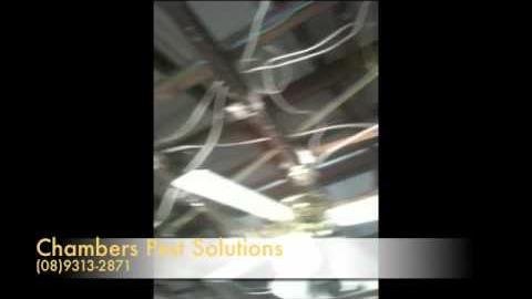 Watch Video : Termite Control Perth