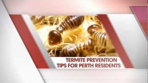 Watch Video: Termite Control Perth - Prevention Tips