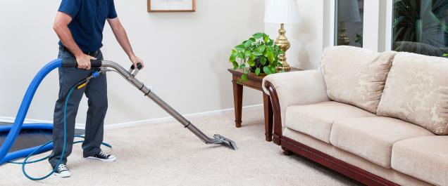 5 Types of Mold Which can Spoil your Carpets Completely