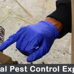 Organic Ant Pest control: Is it Healthier? Safer?