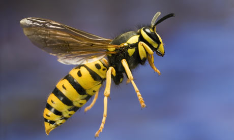 View Photo: BEES & WASPS CONTROL