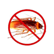 View Photo: COCKROACHES CONTROL