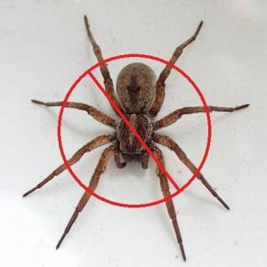 View Photo: SPIDERS CONTROL