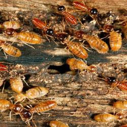 View Photo: TERMITE INSPECTION & TREATMENT