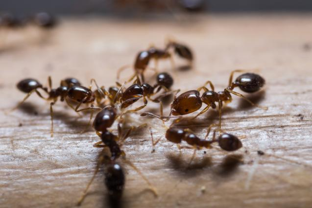 Read Article:  How to prevent ants