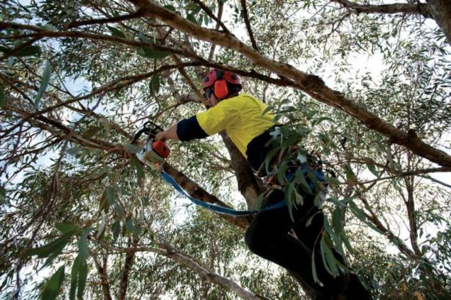 Read Article: Prepping Your Trees And Garden For Spring