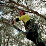 Prepping Your Trees And Garden For Spring