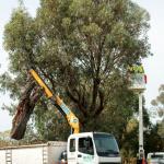 The Lowdown On Tree Risk