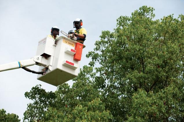 Read Article: Tree Lopping vs Tree Pruning – What's the Difference?