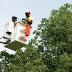 Tree Lopping vs Tree Pruning – What's the Difference?