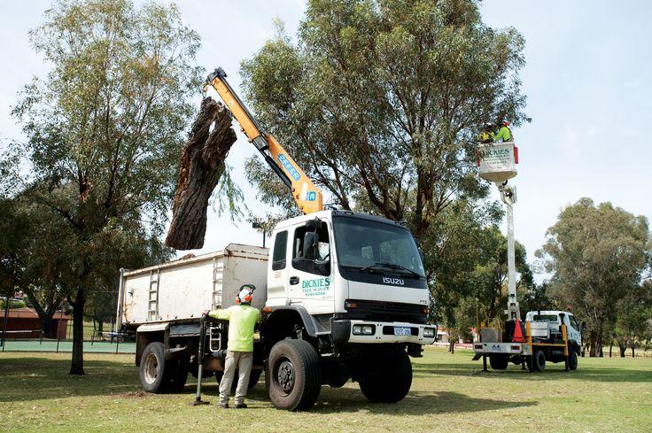 Tree Mulching Perth