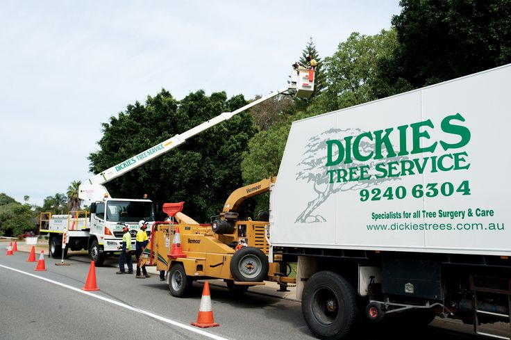 View Photo: Tree Pruning Perth