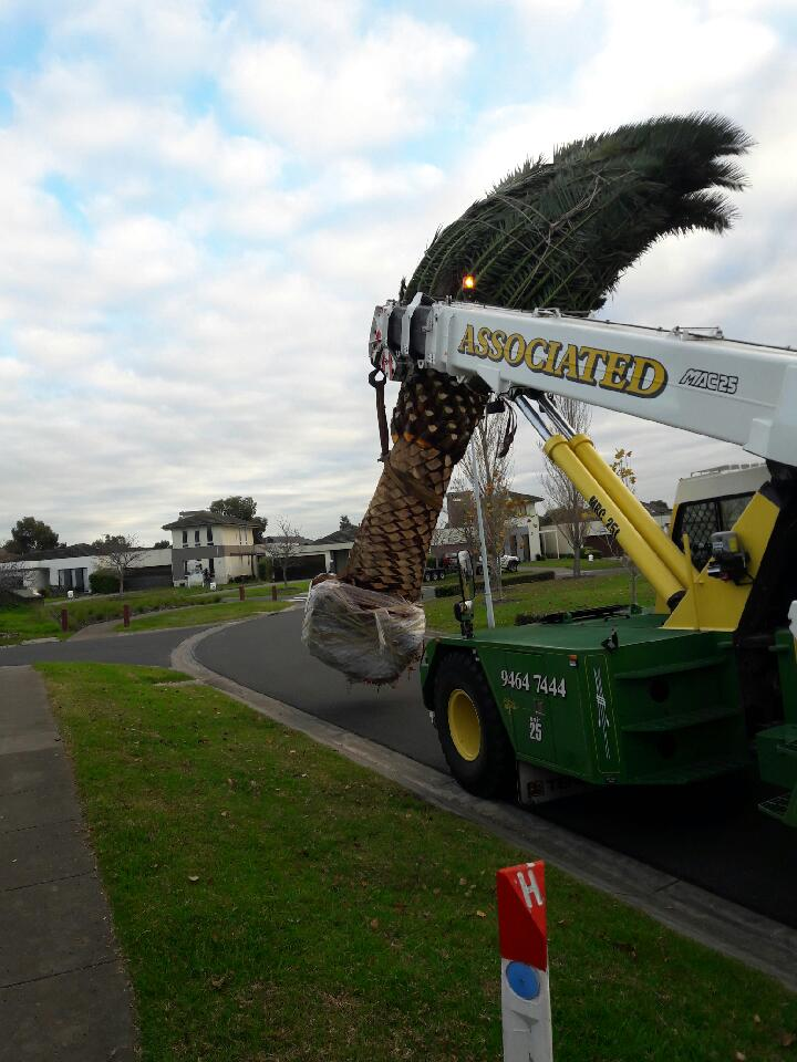 View Photo: Garden Maintenance Melbourne