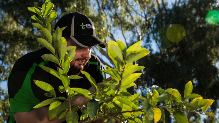 View Photo: Garden Pests