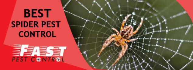 Read Article: 5 Tips which can help you Identify Red back Spiders