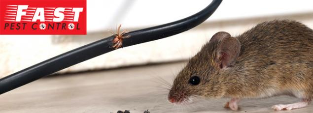 Diseases Which you can be Prone to in a Mice Infested Home