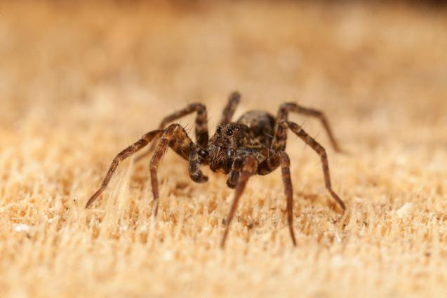 How Can Spider Infestation Be Reduced